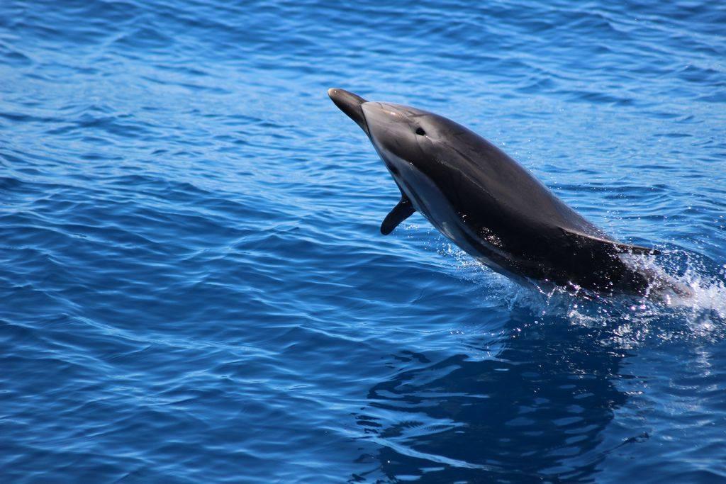 WHALE WATCHING – Alla scoperta del Santuario dei Cetacei